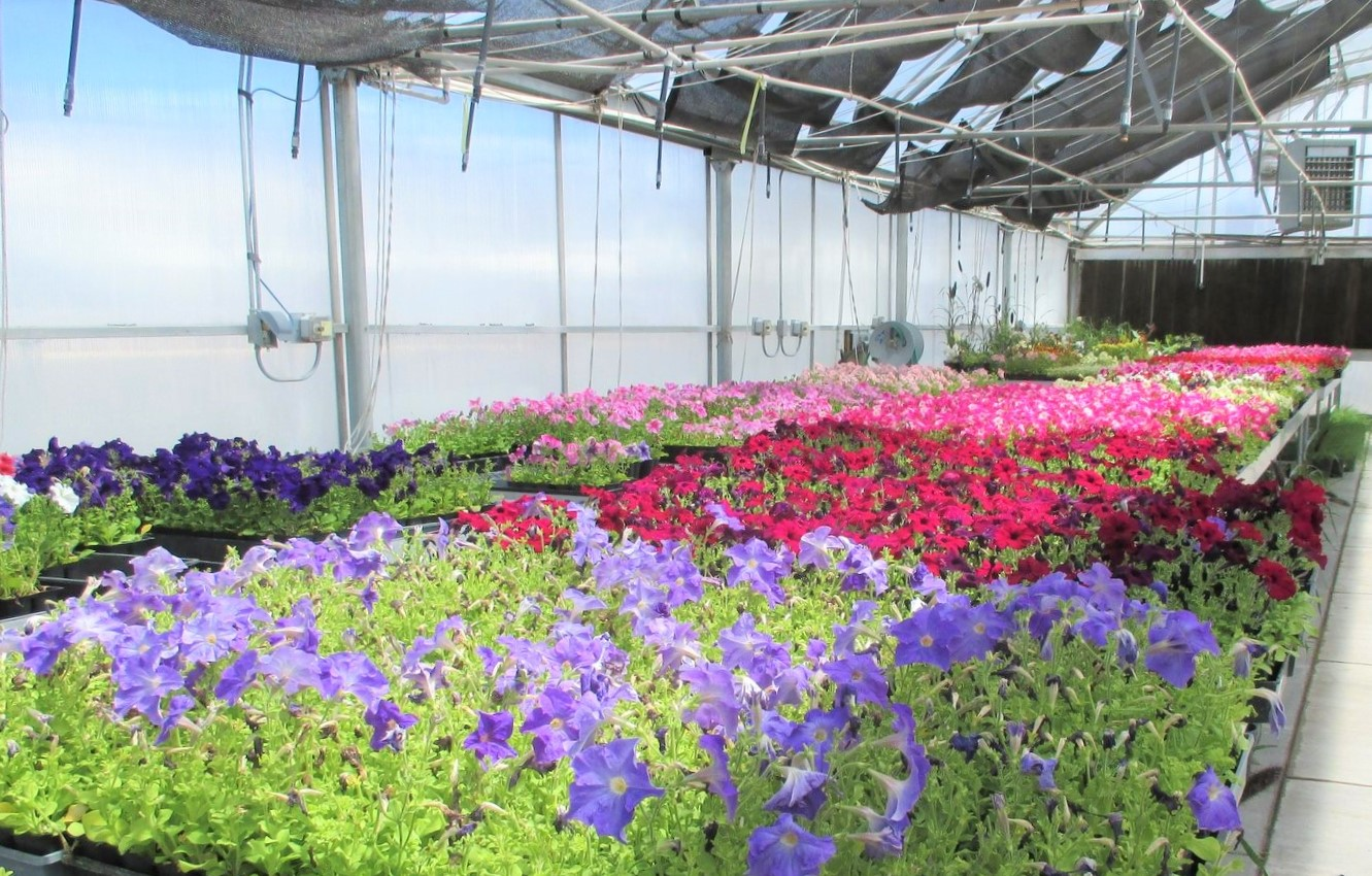 Greenhouse full bloom (3)
